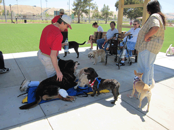 Dogs and their humans at the new Fremont dog park