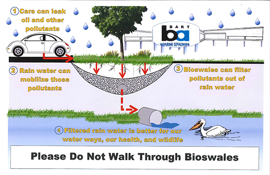 infographic about bioswales