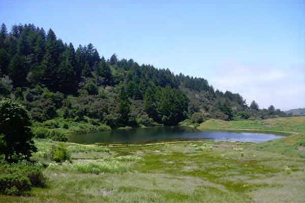 Mindego Ranch was created to protect the endangered species of garter snakes that live near the BART tracks running to SFO